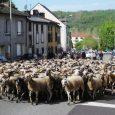 La deuxième édition de la fête du pastoralisme, de l'agriculture et de la ruralité a récolté un beau succès à Pontgibaud samedi dernier.       […]